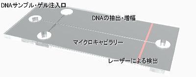 DNAチップ」-ナノエレクトロニク...
